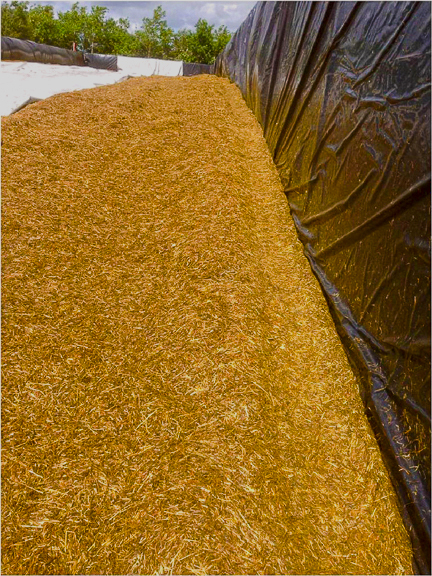 Kornet - kuil zonder broei of schimmel